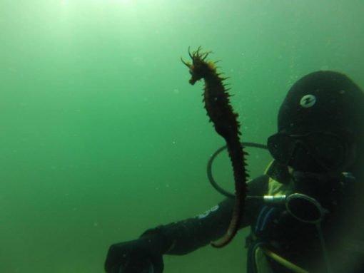 Other Sea Horse (Baltar Beach)