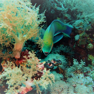Scuba Diving Atlantic Islands
