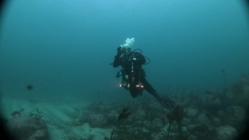 Diving in Galicia
