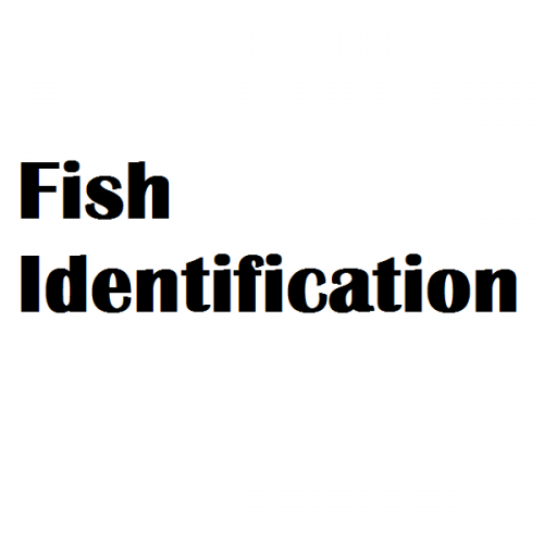 fish identification