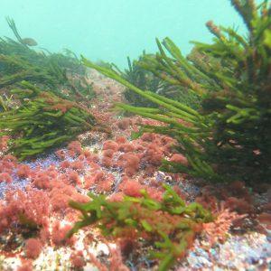Buceo en las Islas Cies (Vigo) desde Sanxenxo