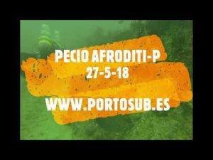 Afroditi-P