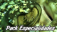 5 Diving Specialities + Advanced Course