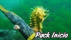 Open Water Diver + 10 Dives