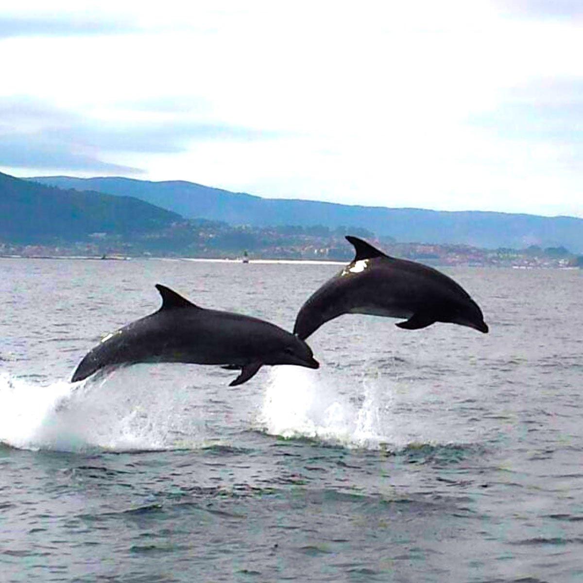 Avistamiento de cetáceos 3