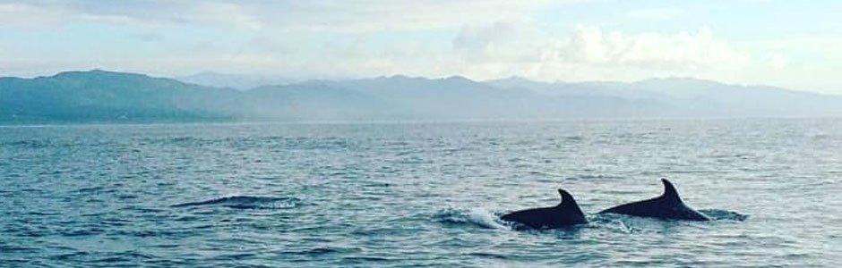 Avistamiento de cetáceos 1