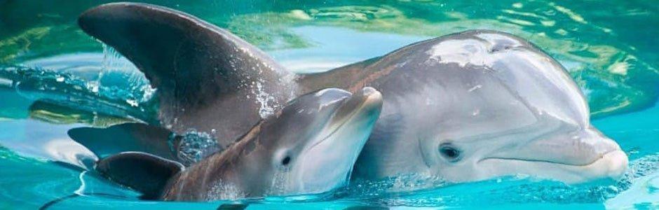 Avistamiento de cetáceos 2